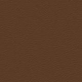 Truffle 0284